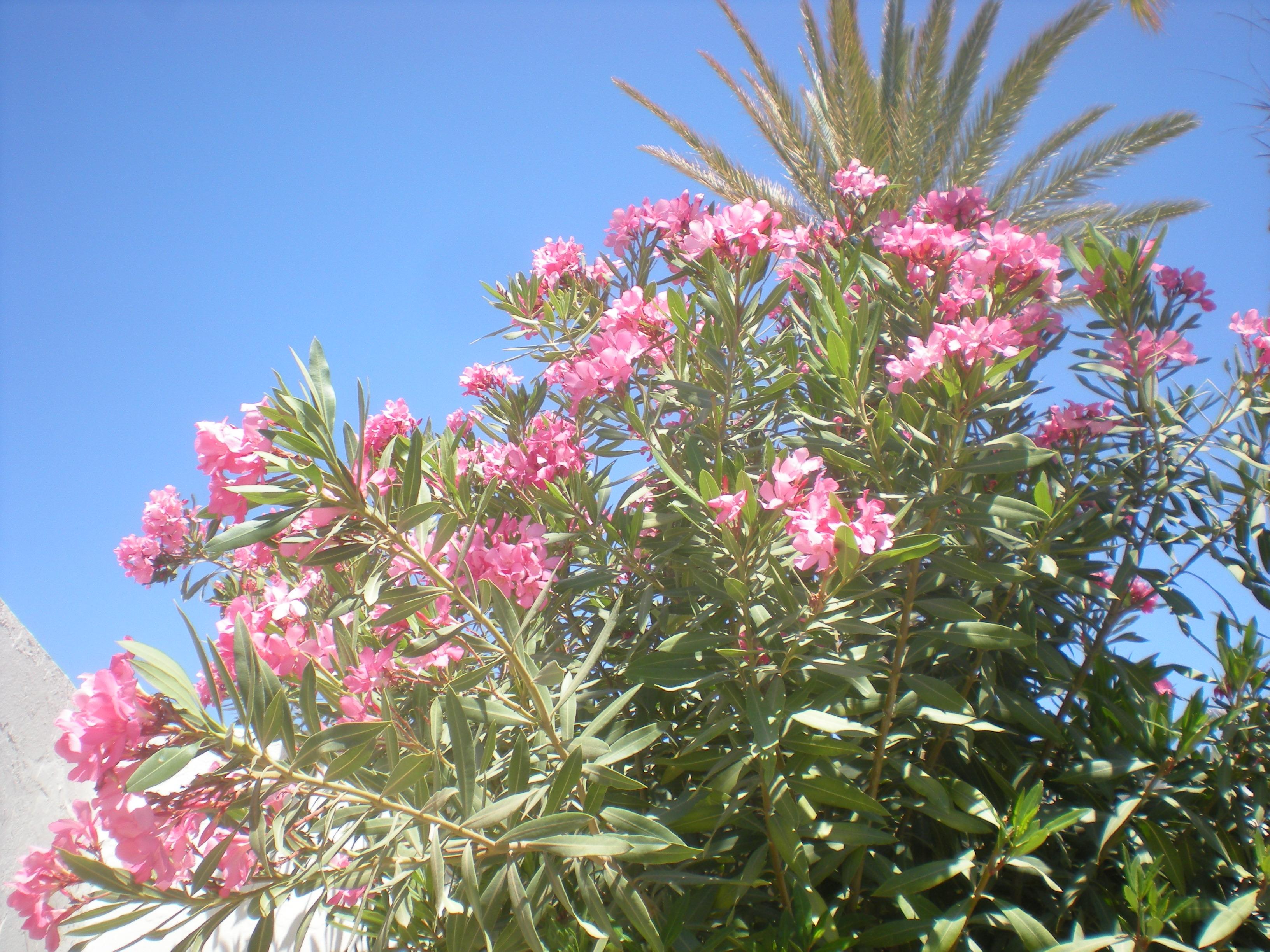 fleurs tunisie