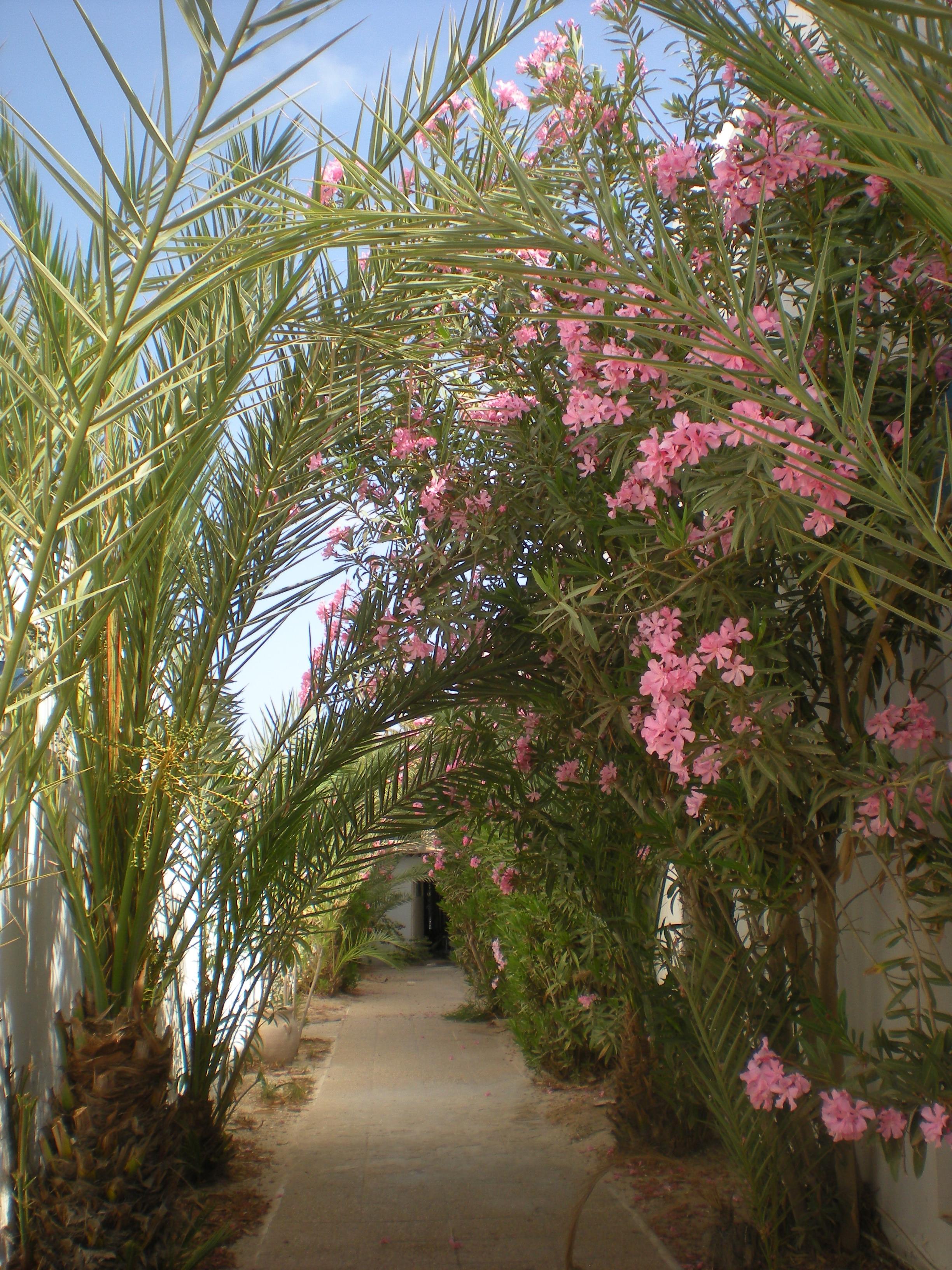 chemin fleurs tunisie