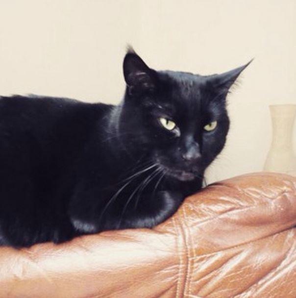 Papyrus chat noir