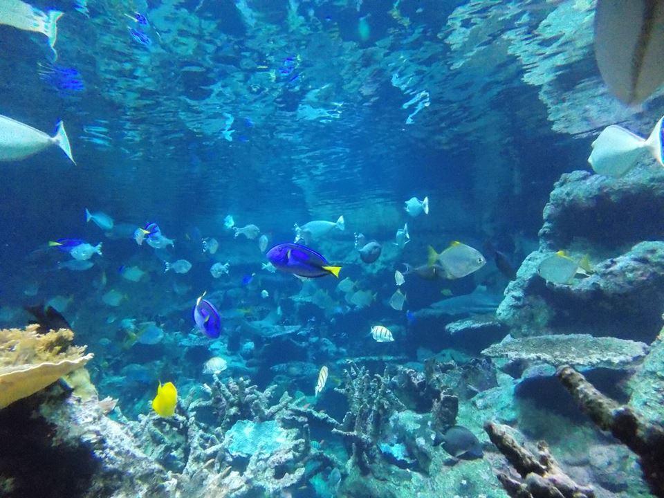 aquarium cite de la mer