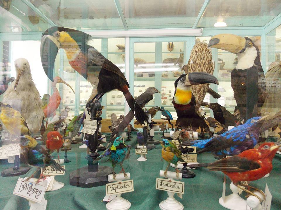 musée liais cherbourg