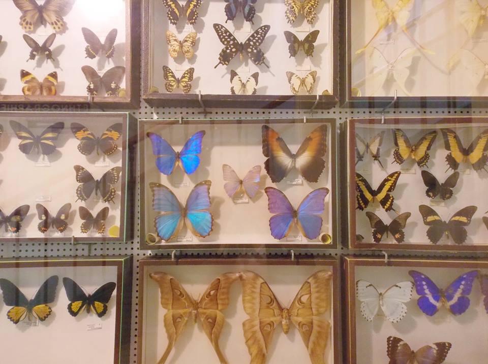musée liais