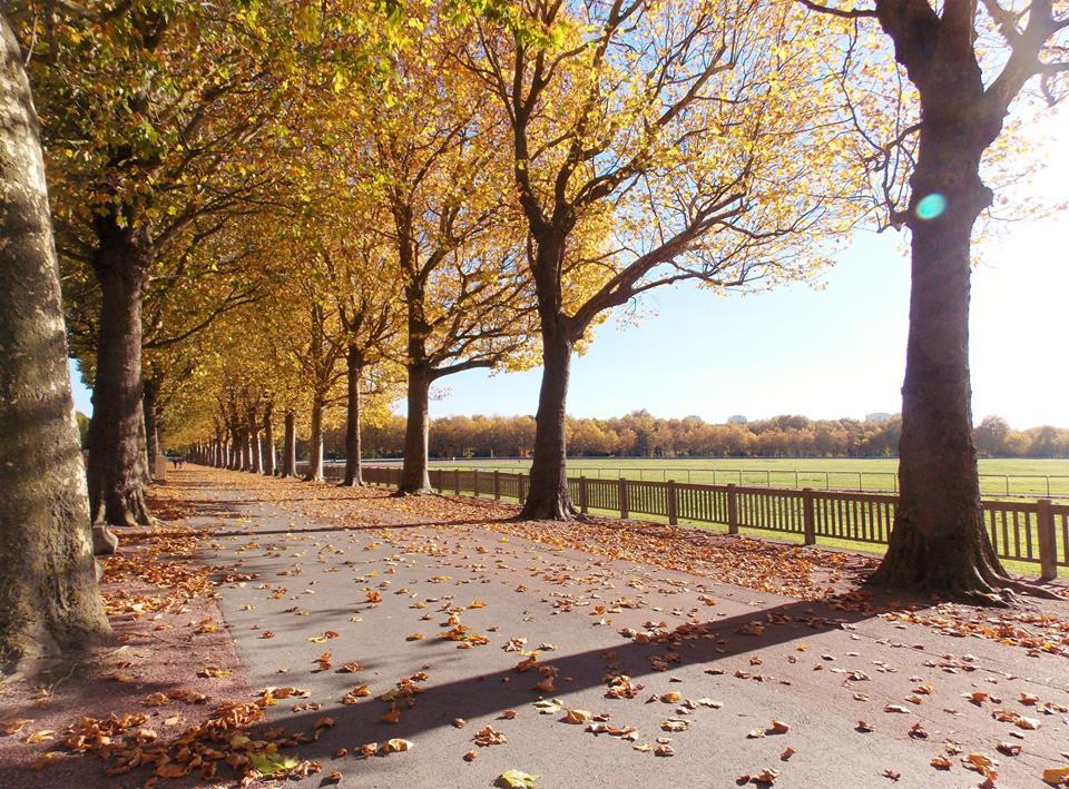 automne caen