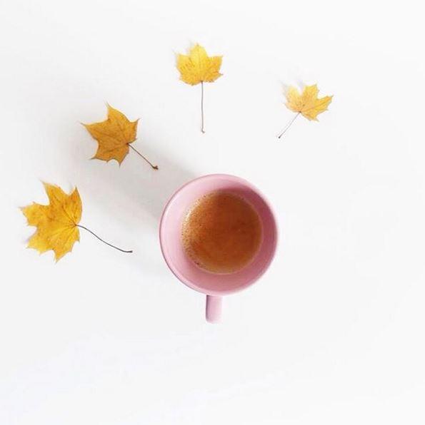 z café feuilles