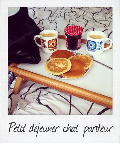 petit dejeuner chat