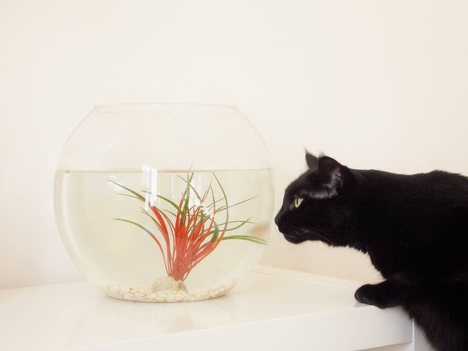chat aquarium