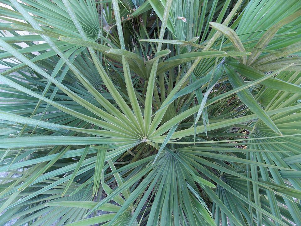 plantes jardin botanique caen